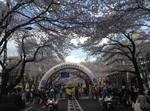 桜まつり2.jpg